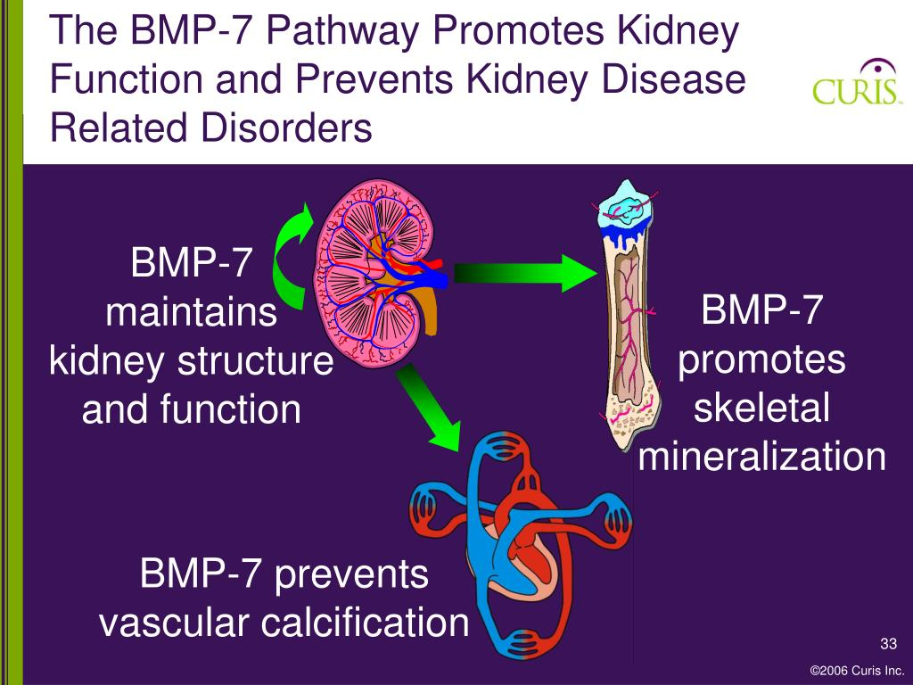 The BMP-7 Pathway Promotes Kidney Function and Prevents Kidney Disease Related Disorders