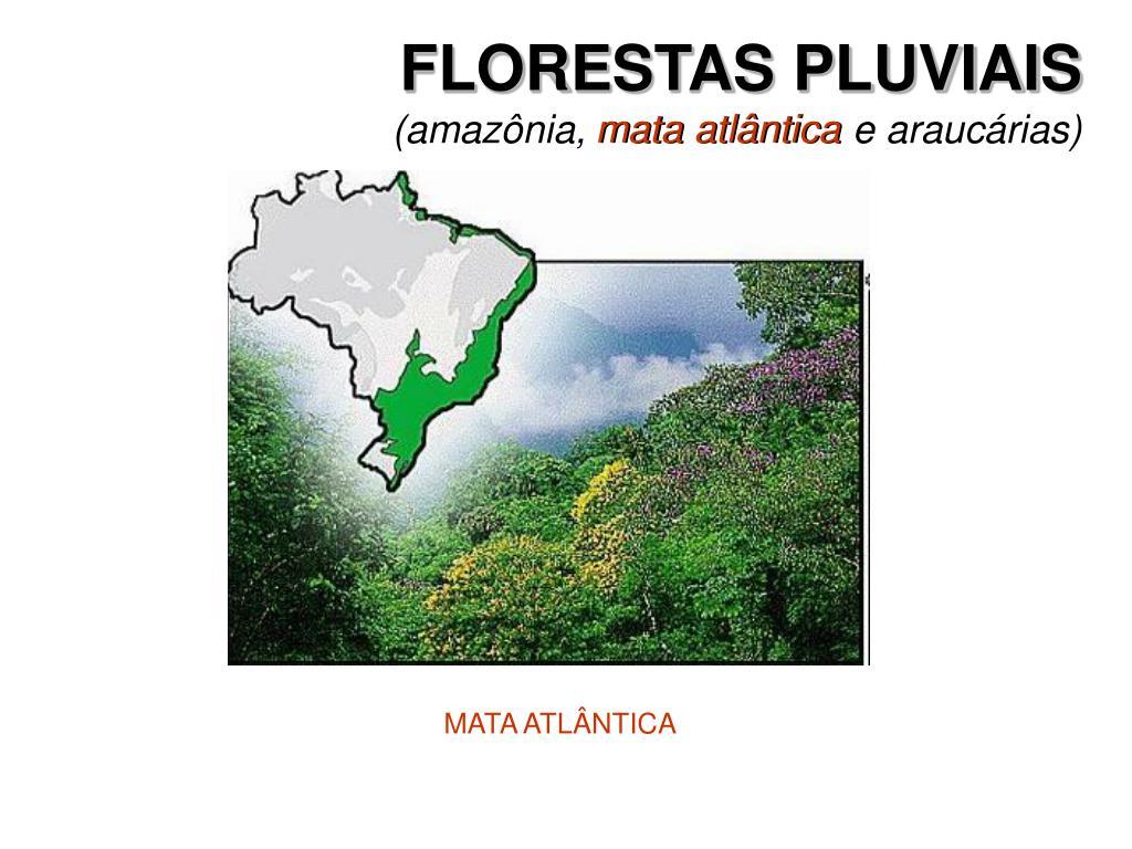 FLORESTAS PLUVIAIS