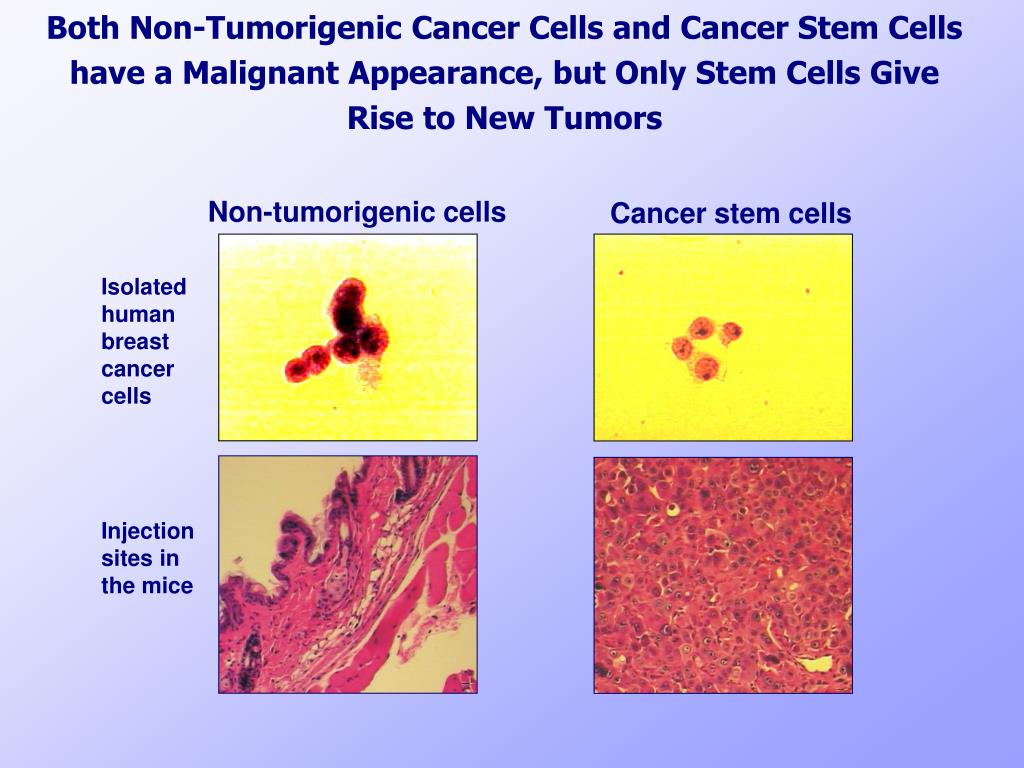 Both Non-Tumorigenic Cancer Cells and Cancer Stem Cells