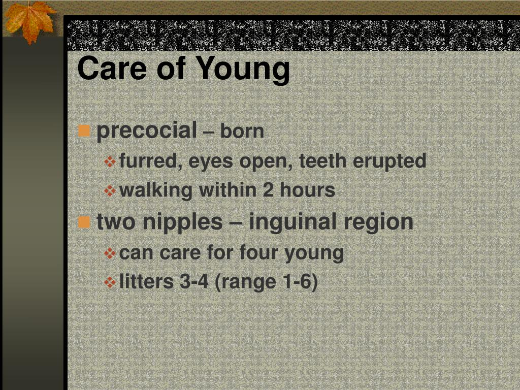 Care of Young