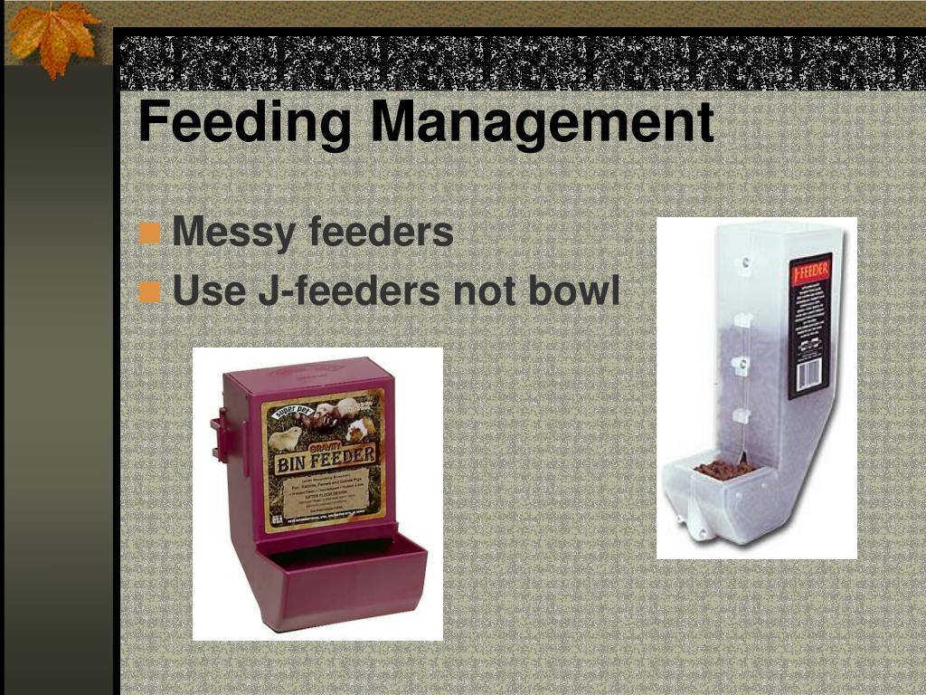 Feeding Management