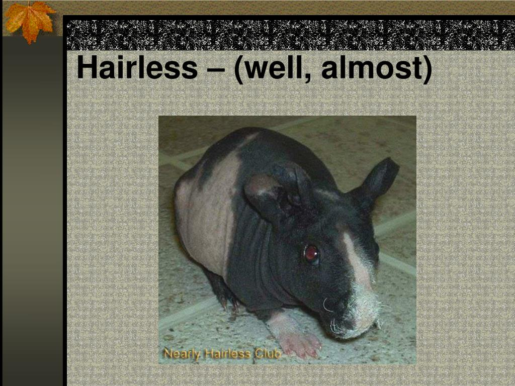Hairless – (well, almost)
