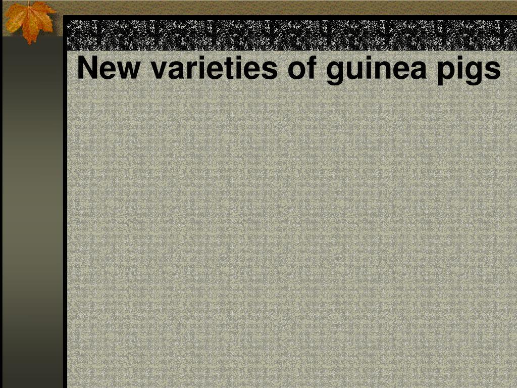 New varieties of guinea pigs