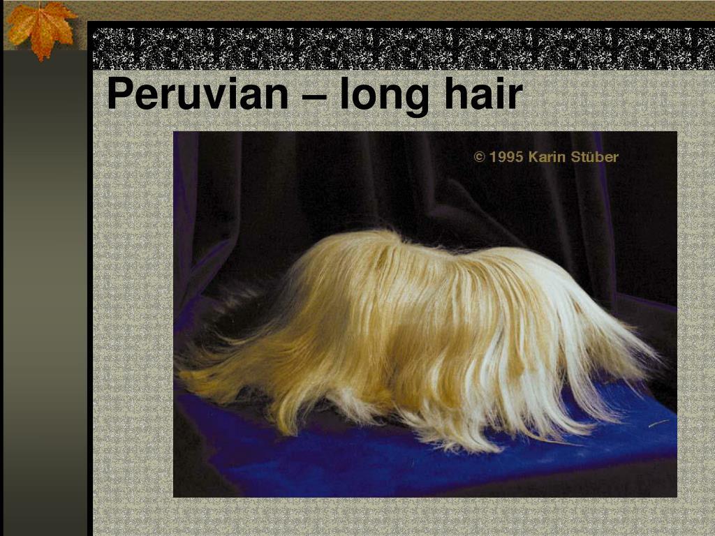 Peruvian – long hair