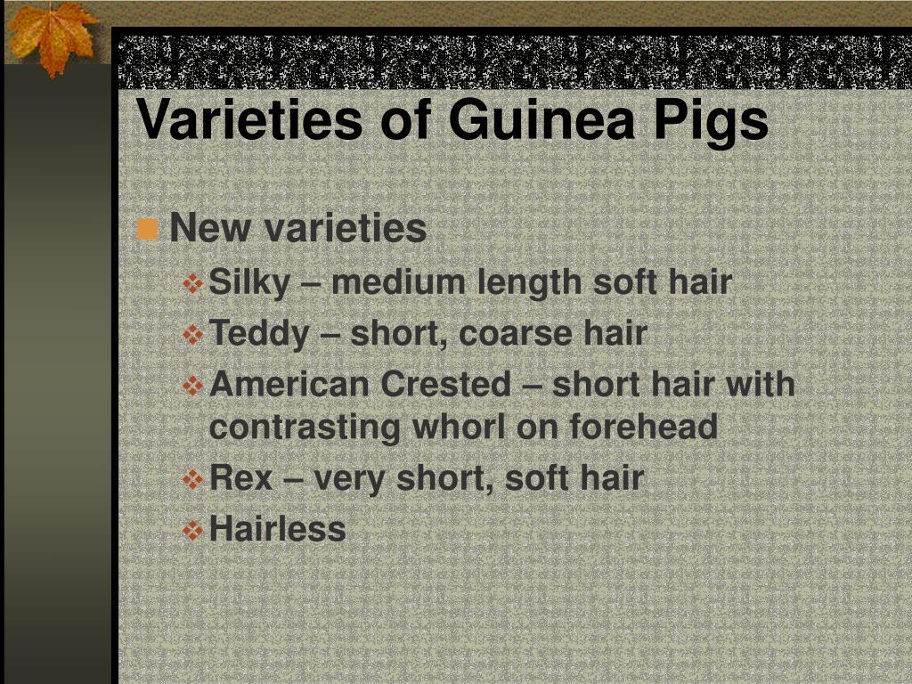 Varieties of Guinea Pigs