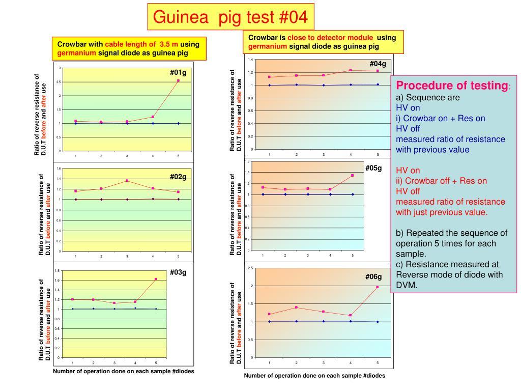 Guinea  pig test #04