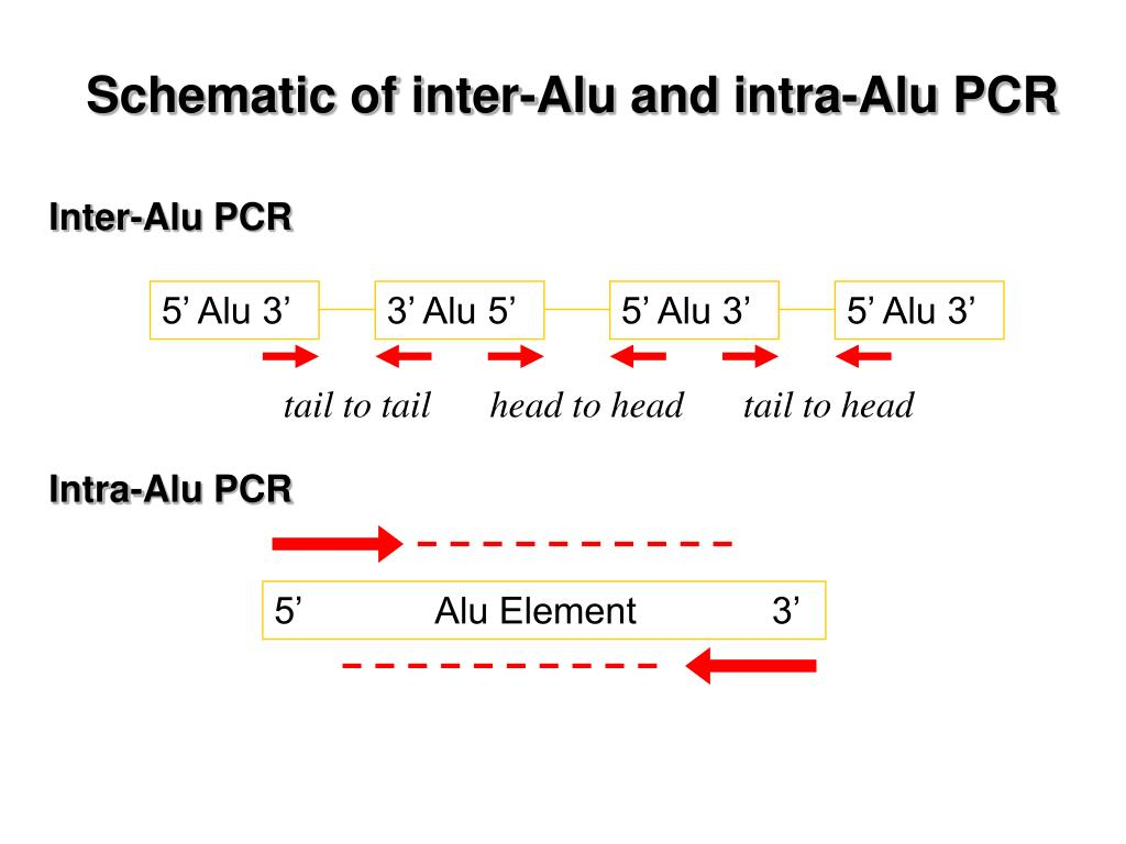 Schematic of inter-Alu and intra-Alu PCR