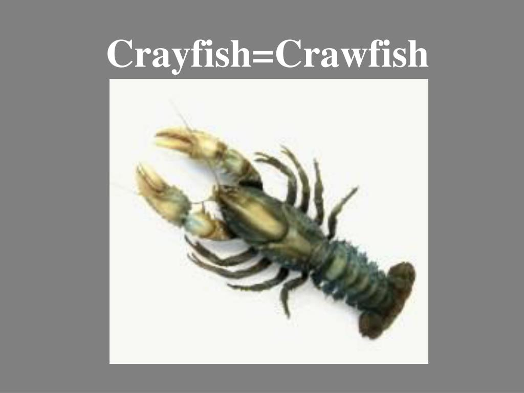 Crayfish=Crawfish