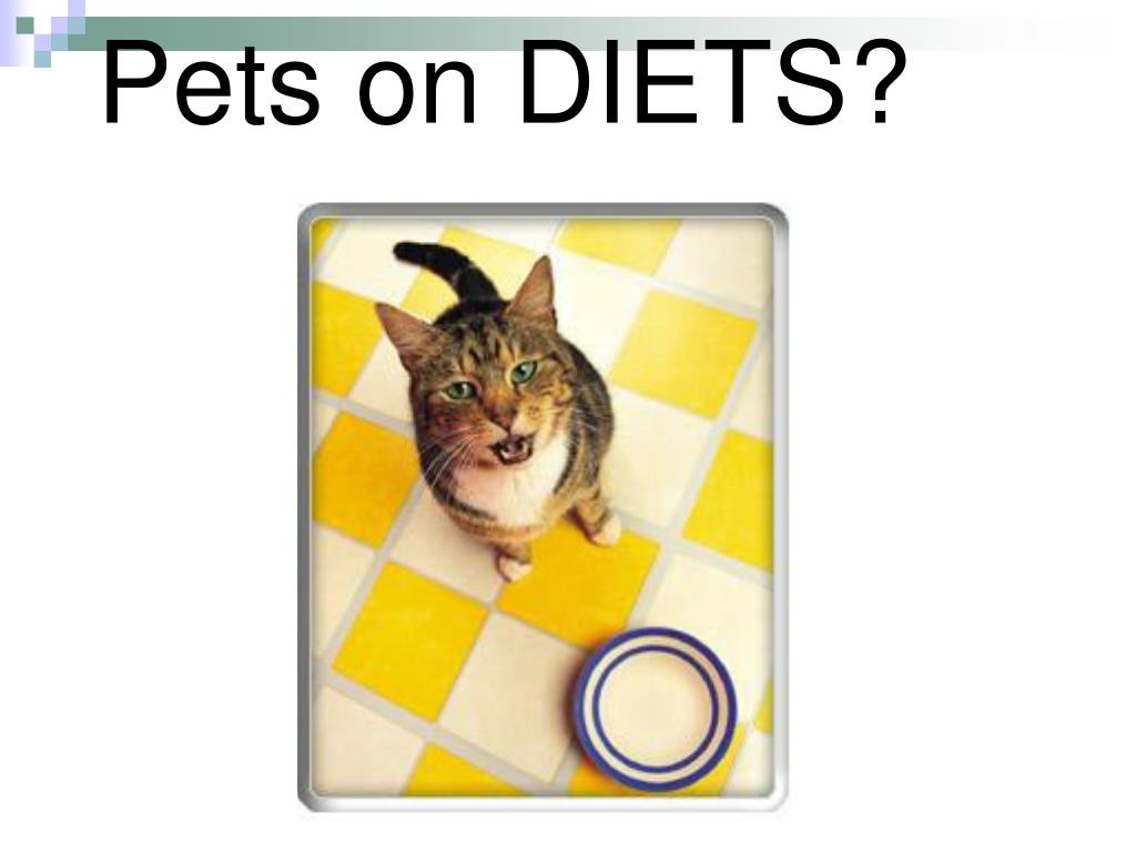 Pets on DIETS?