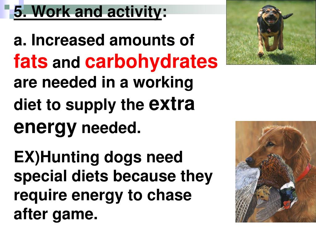 5. Work and activity
