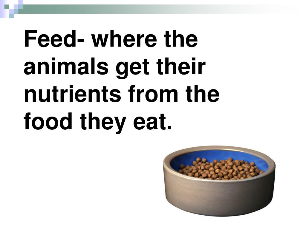 Feed- where the animals get their nutrients from the food they eat.