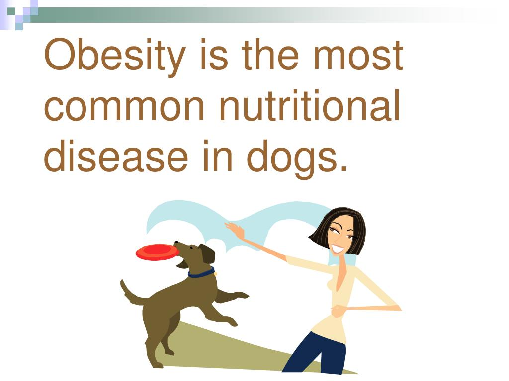 Obesity is the most common nutritional disease in dogs.