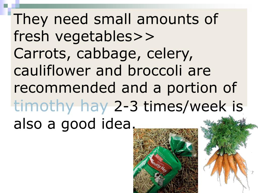 They need small amounts of fresh vegetables>>