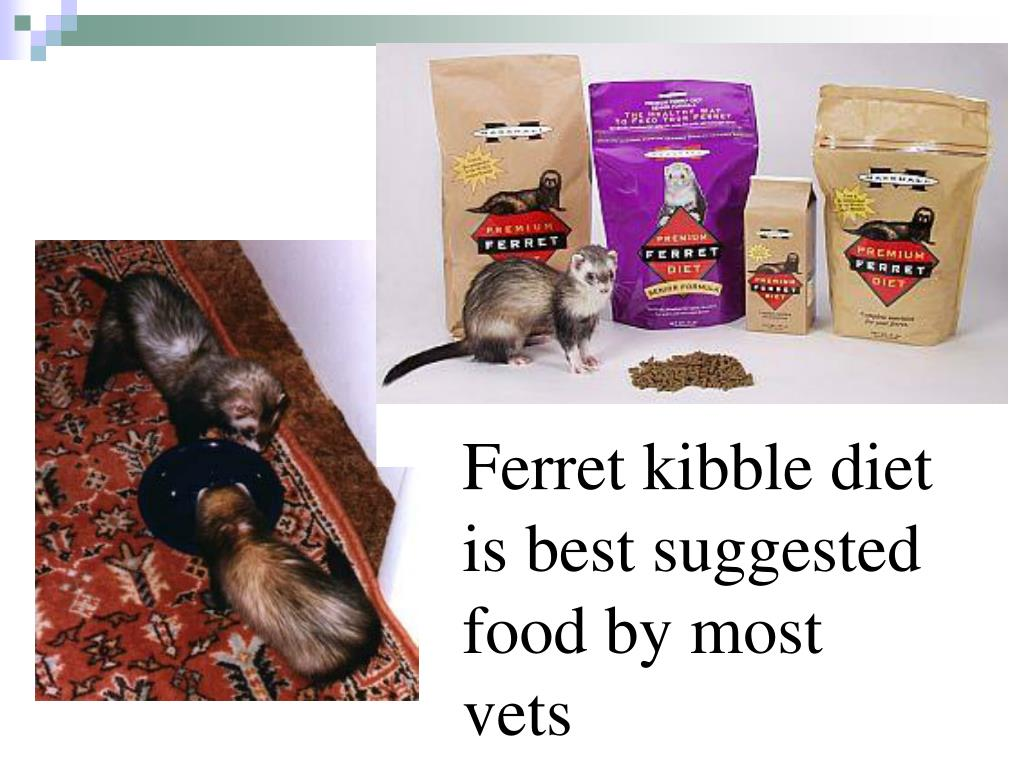 Ferret kibble diet is best suggested food by most vets