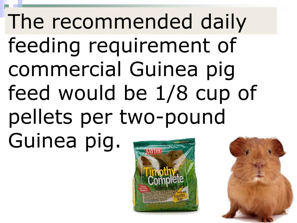 The recommended daily feeding requirement of commercial Guinea pig feed would be 1/8 cup of pellets per two-pound Guinea pig.