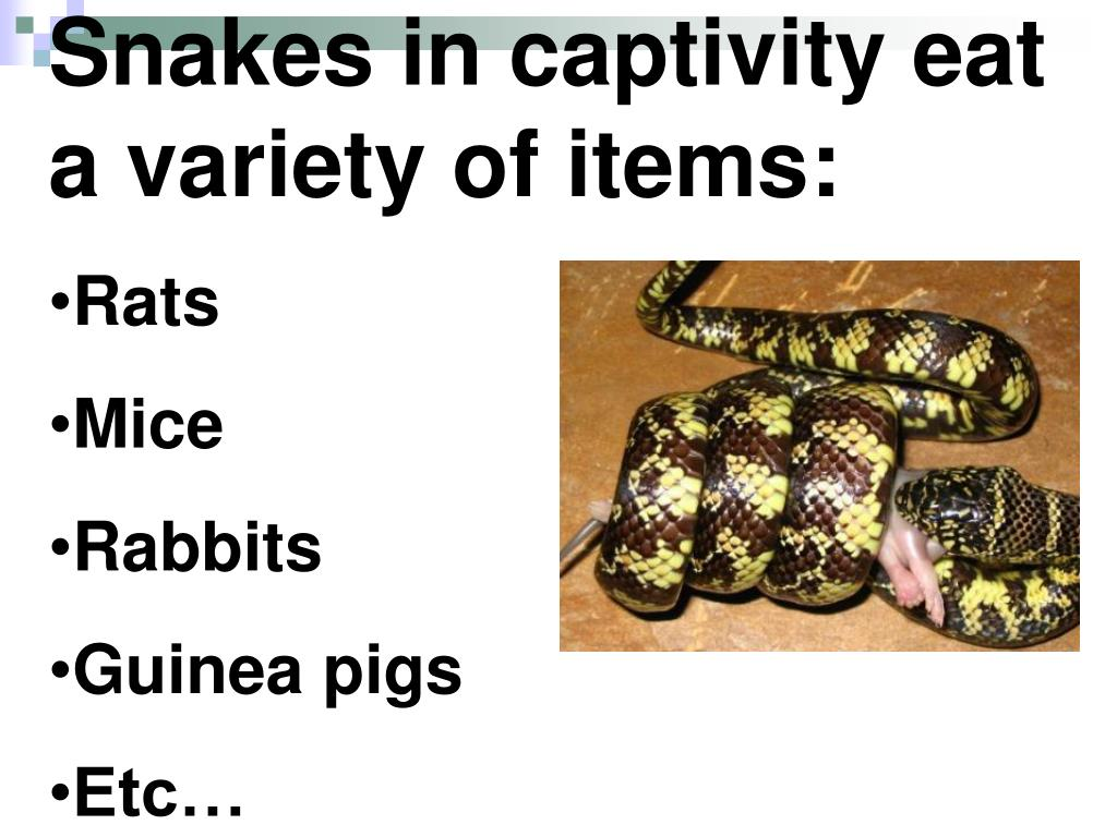 Snakes in captivity eat a variety of items: