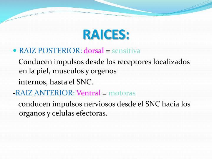 RAICES: