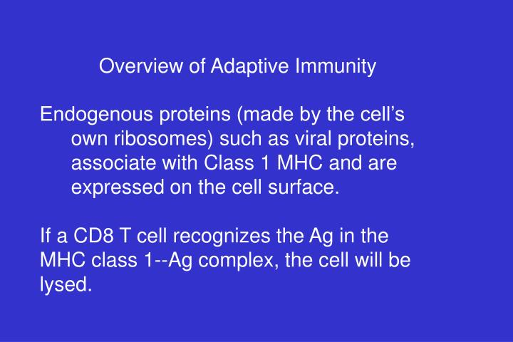Overview of Adaptive Immunity