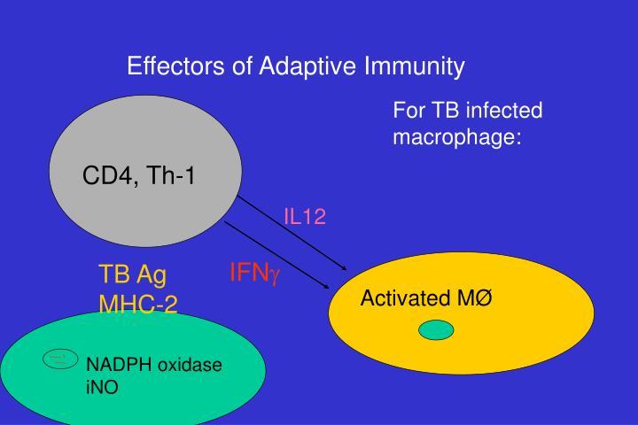 Effectors of Adaptive Immunity
