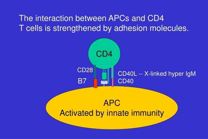 The interaction between APCs and CD4