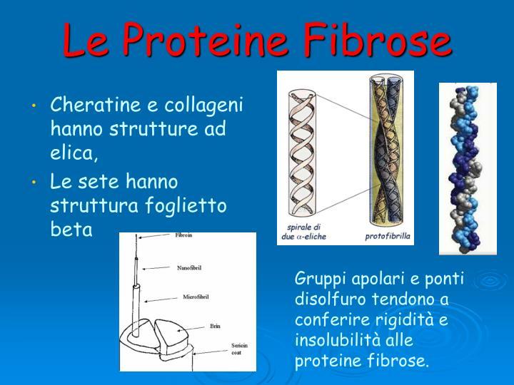 Le Proteine Fibrose