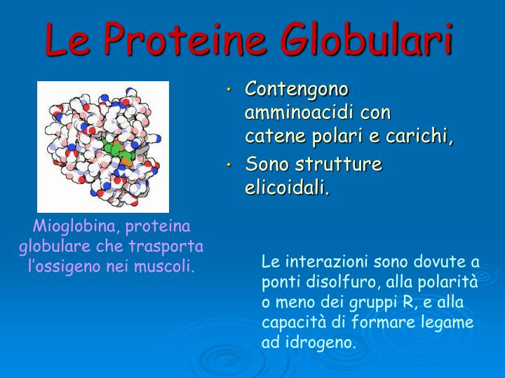 Le Proteine Globulari