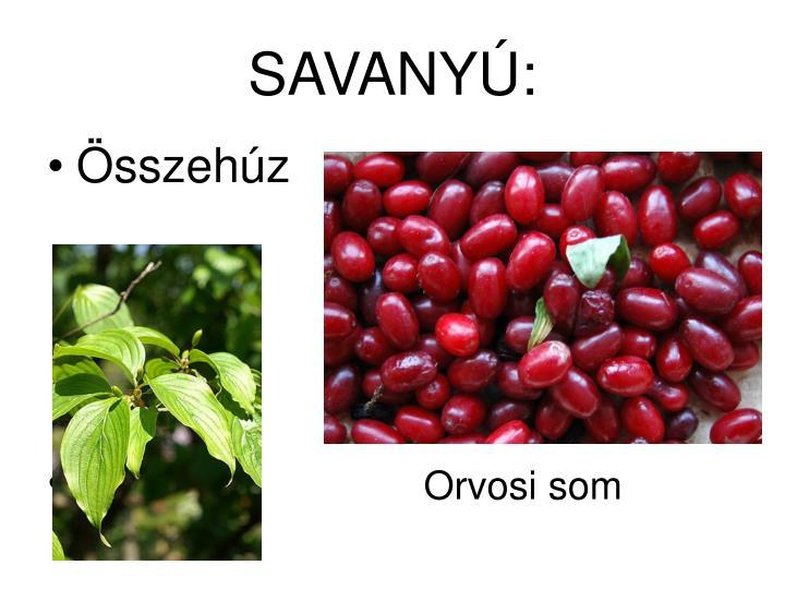 SAVANYÚ: