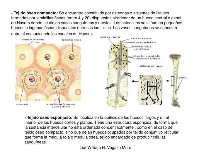 - Tejido óseo compacto: