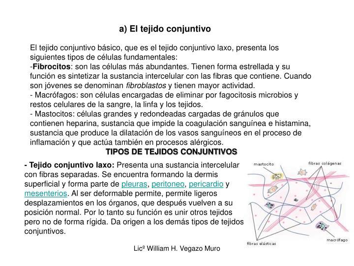 a) El tejido conjuntivo