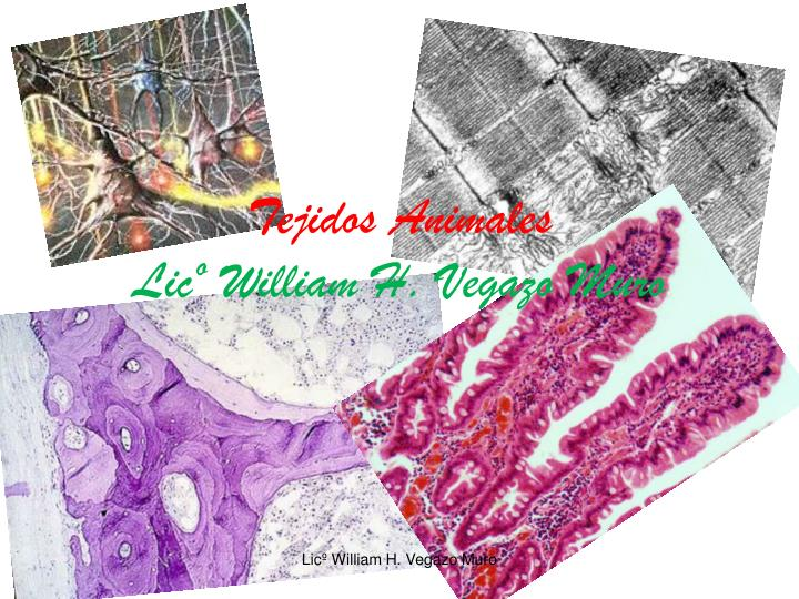 Tejidos animales lic william h vegazo muro