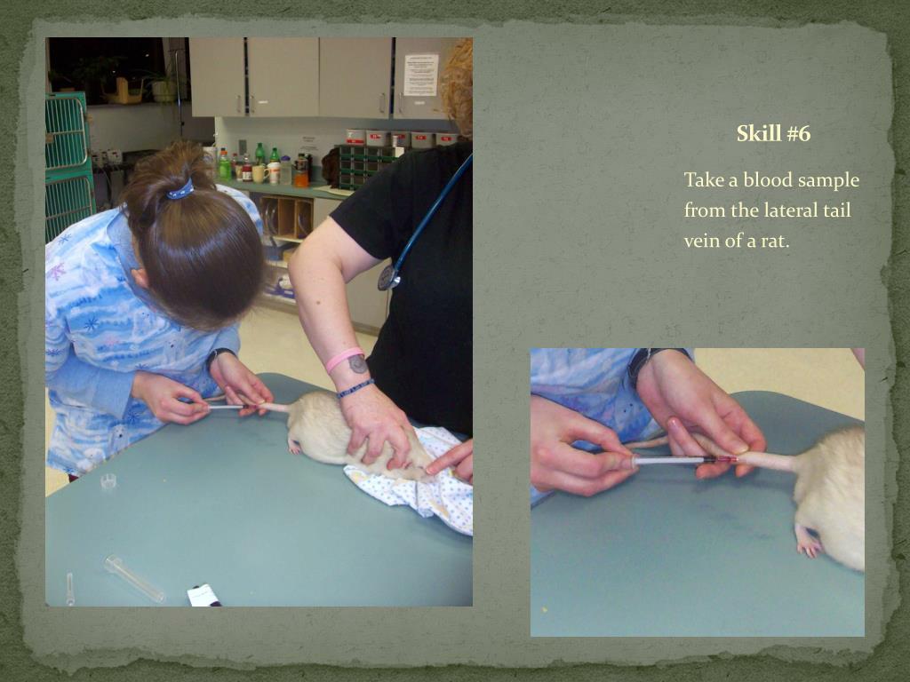 Skill #6
