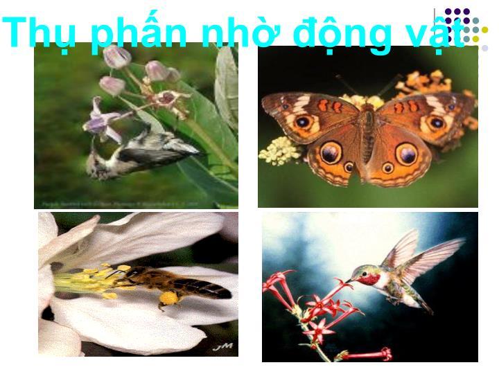 Thụ phấn nhờ động vật