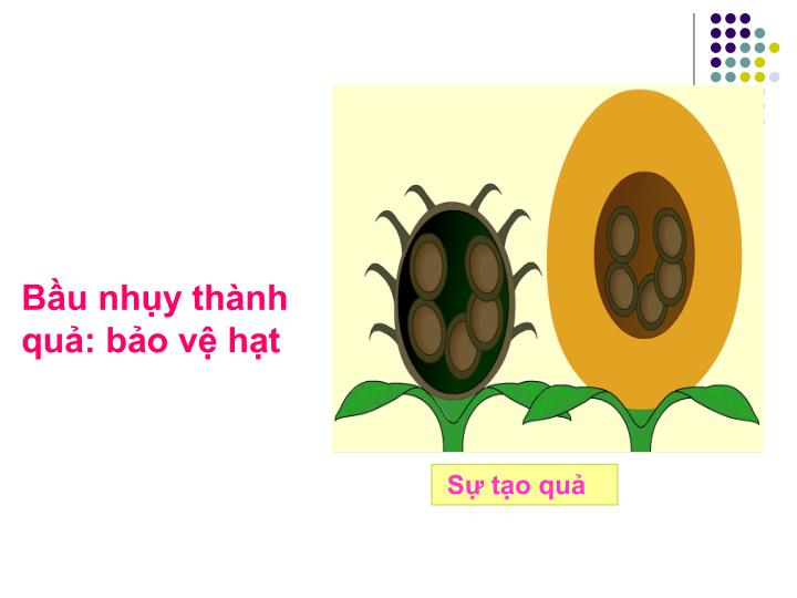 Bầu nhụy thành quả: bảo vệ hạt