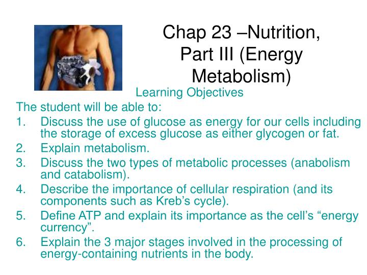 Chap 23 –Nutrition, Part III (Energy Metabolism)