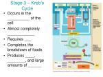 stage 3 kreb s cycle
