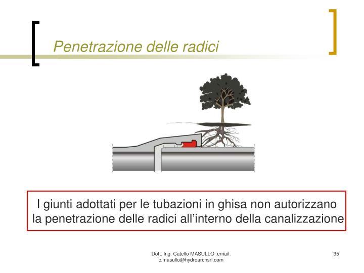 Penetrazione delle radici