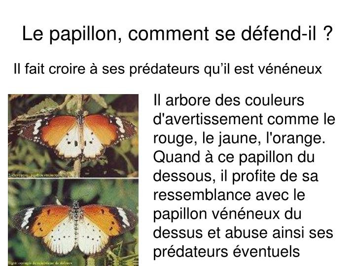 Le papillon, comment se défend-il ?