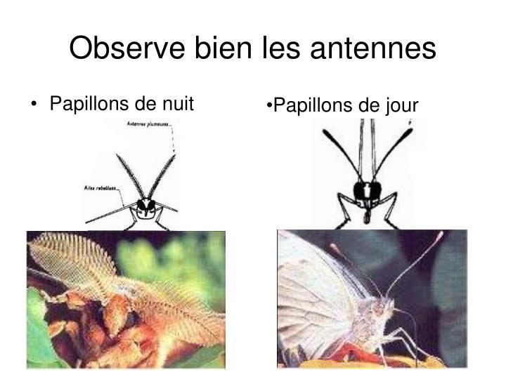 Observe bien les antennes