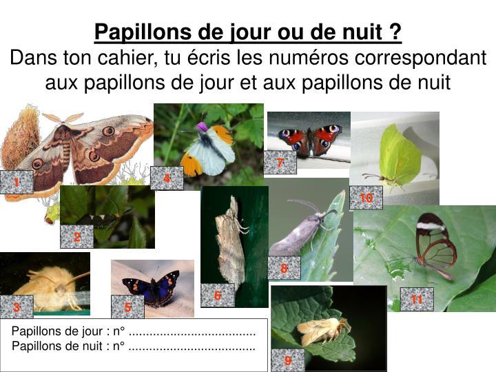 Papillons de jour ou de nuit ?
