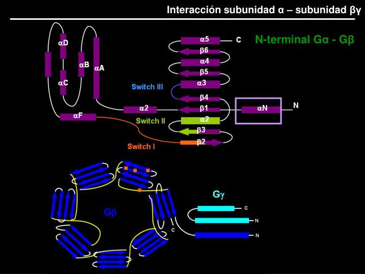 Interacción subunidad