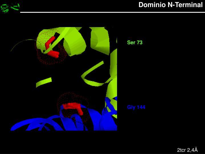 Dominio N-Terminal