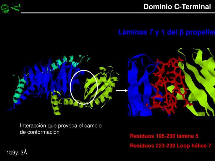 Dominio C-Terminal
