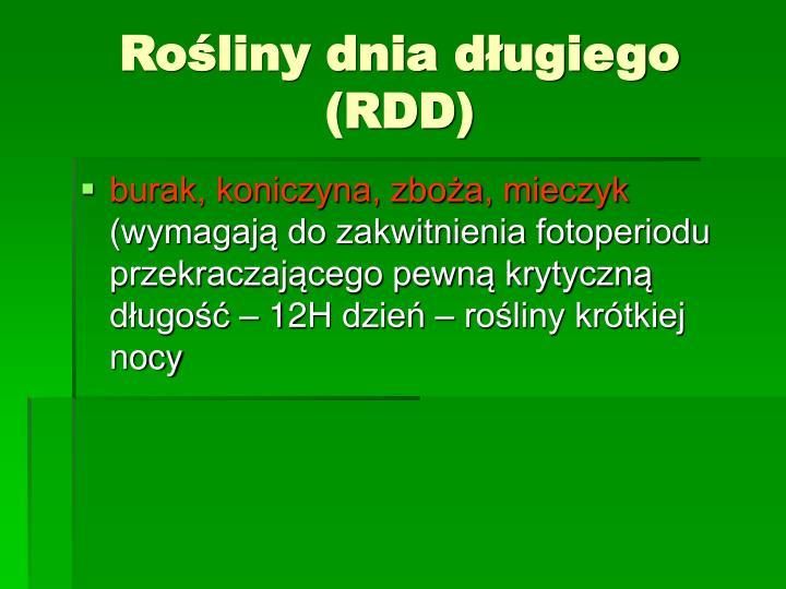 Rośliny dnia długiego (RDD)