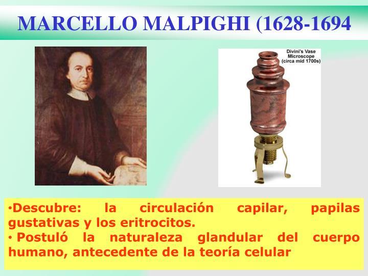 MARCELLO MALPIGHI (1628-1694