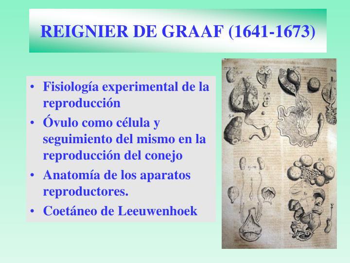 REIGNIER DE GRAAF (1641-1673)