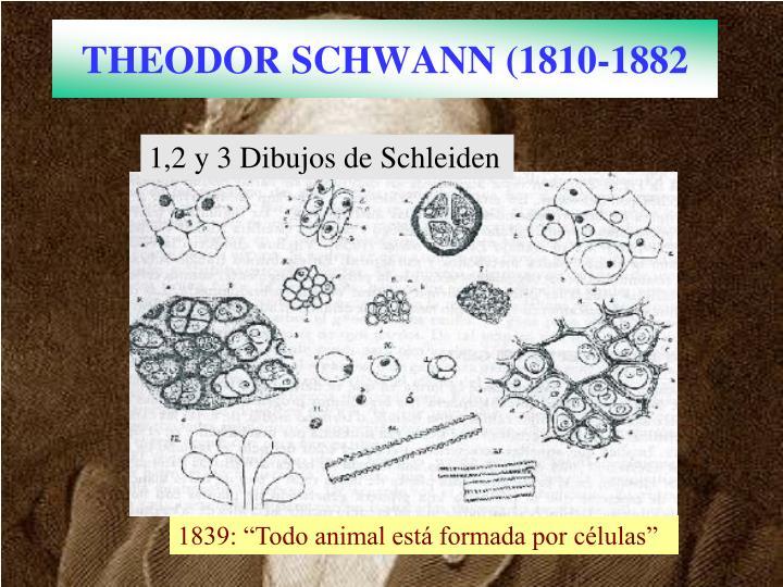 THEODOR SCHWANN (1810-1882