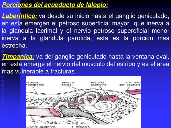 Porciones del acueducto de falopio: