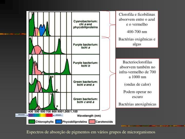 Clorofila e ficobilinas absorvem entre o azul e o vermelho