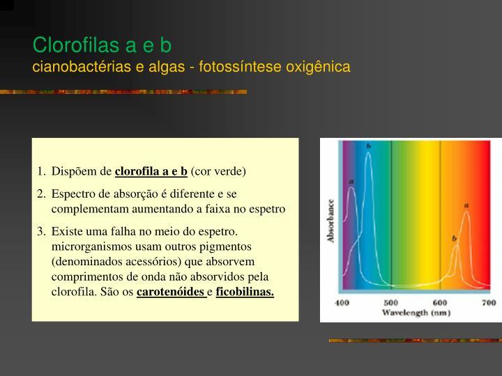 Clorofilas a e b