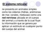 el sistema reticular